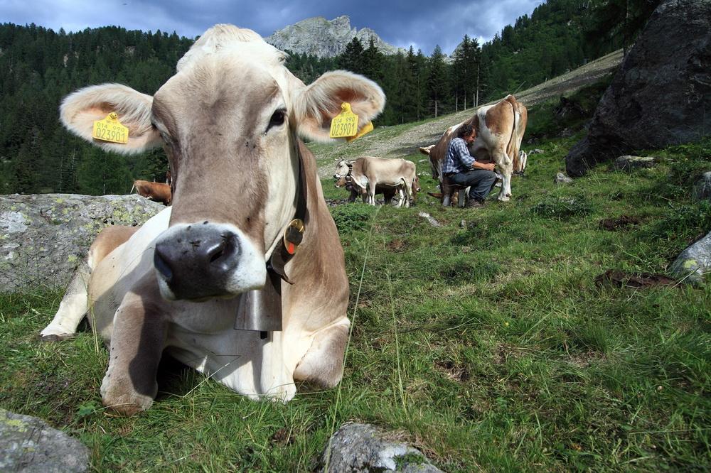 vacanza in Valtellina